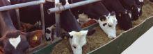 Krmný žlab OK PLAST pro krmné chodby stájí skotu
