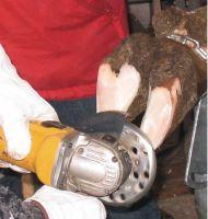 Brusný a řezný kotouč segmentový 6Cut na kopyta a paznehty