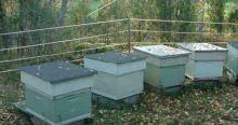 Sada na elektrický ohradník proti medvědům na ochranu včelích úlů 200 m
