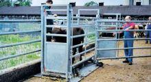 Ližinová paletová váha Agreto 4 t nerezové ližiny na zvířata, dobytek, prasata