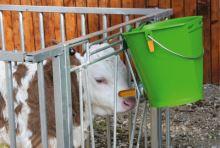 Napájecí kbelík s dudlíkem pro telata hygienický