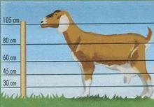Sada na elektrický ohradník pro kozy 200 m s páskou