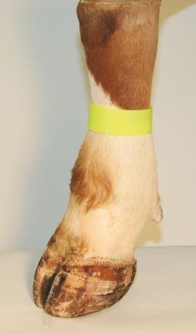 Páska na nohu se suchým zipem pro označování zvířat