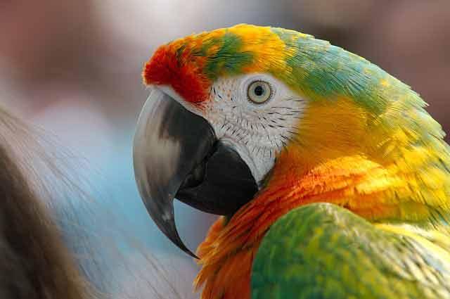 Potřeby pro ptactvo