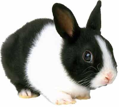 Potřeby pro králíky