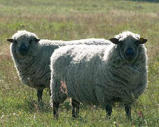Sady na ohradník pro ovce a kozy