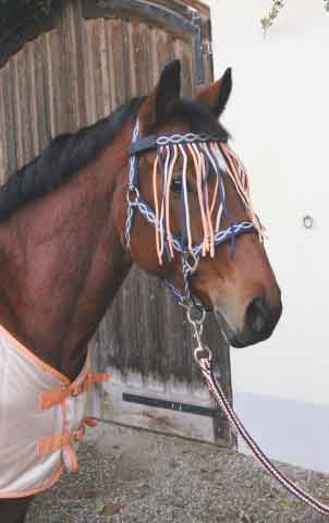 Sety pro koně