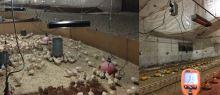 Infrazářič závěsný SYNER LCA 1000 W černý na 6 m3 pro kuřata, selata, pod pergolu