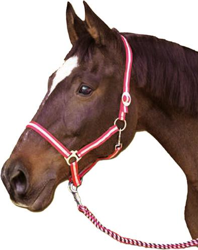 Stájová ohlávka na koně Hippo velikost 00 hříbě nylonová černošedá