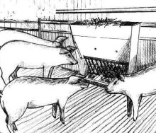 Doplňkové krmítko na seno pro prasata, selata