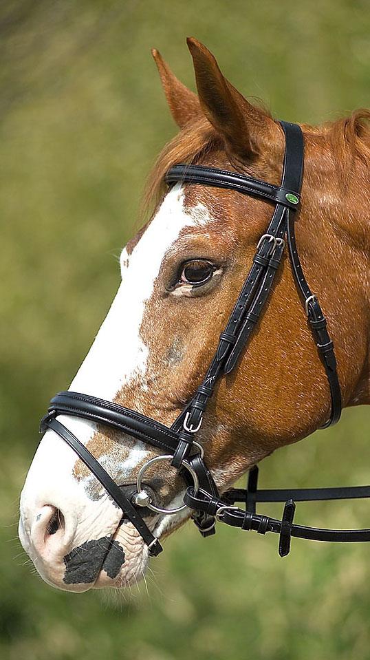 Uzdečka CHEVAL na koně černá velikost COB