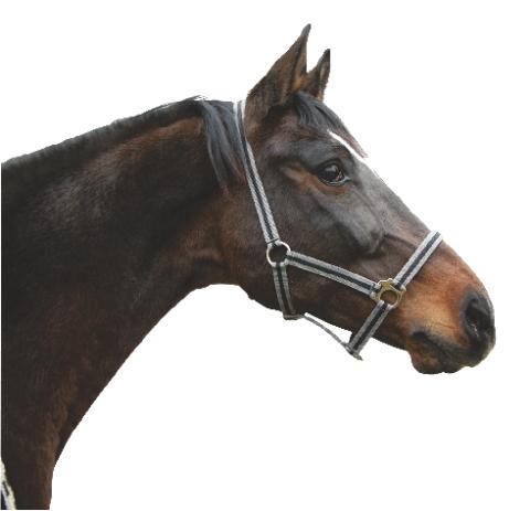 Ohlávka pro koně nylonová Hippo velikost 4 barva černá/šedá