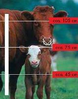 Sada na elektrický ohradník pro dospělý hovězí dobytek (skot) 2000 m