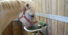 Misková plováková plastová napáječka La GÉE Polyflex NC pro koně, skot, ovce, kozy i psy