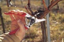Ergonomické zahradní nůžky Felco 8 na větve, na vinohrad do průměru větví 25 mm