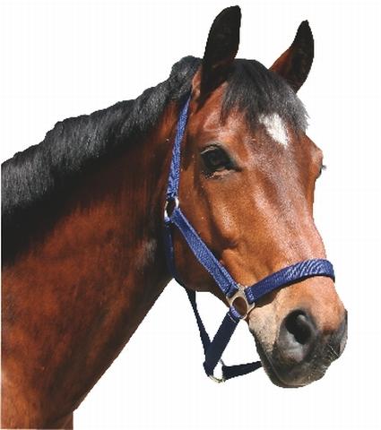 Ohlávka pro koně nylonová s bandáží barva modrá velikost 2
