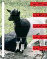Sada na elektrický ohradník pro kozy 500 m s provázkem