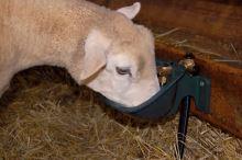 Misková kolíková litinová napáječka La GÉE Polyfirst PF1 pro mladé ovce, kozy a telata
