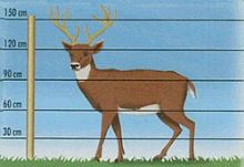 Sada na elektrický ohradník pro jeleny, siky a daňky ve farmovém chovu 200 m