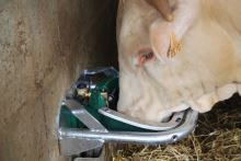 Misková jazyková litinová napáječka La GÉE Polyself Vertical pro ovce, kozy, skot a koně