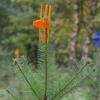PlantaGard® Cactus ochranná manžeta jehličnatých stromků proti okusu zvěří oranžová 100 ks