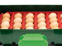 Sada držáků vajec pro líhně Covina Super 12, EGG TECH ET 12, Real 12