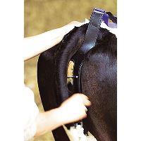 Bandáž kožená ROBUS proti výhřezu dělohy krav