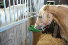 Misková jazyková plastová napáječka La GÉE Polyflex Vertical pro ovce, kozy, skot a koně