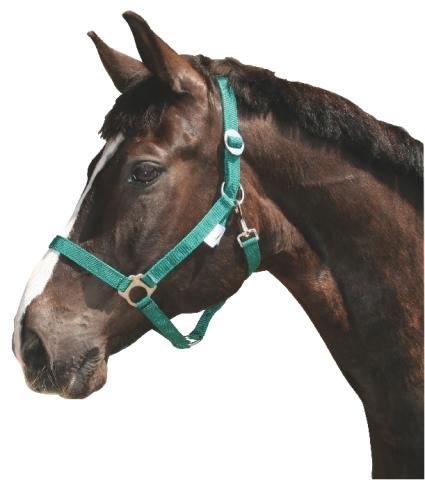 Ohlávka pro koně nylonová s bandáží barva zelená velikost 0